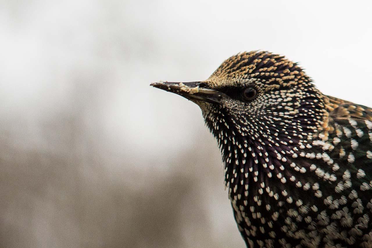 Oiseaux-11.jpg