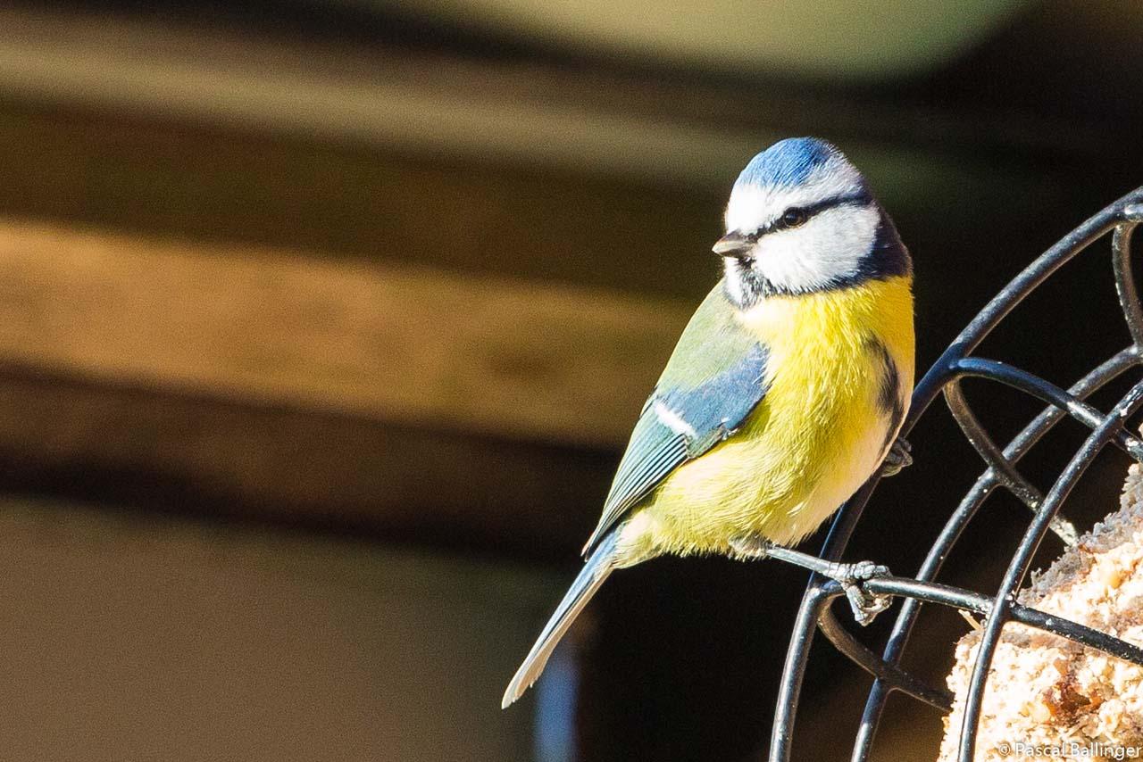 Oiseaux-3.jpg
